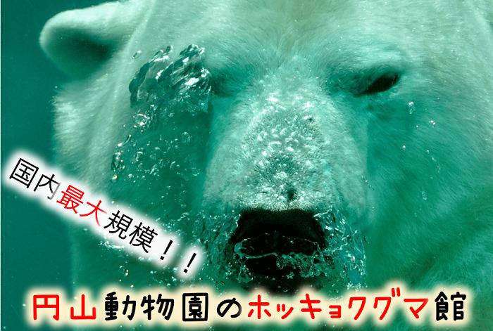円山動物園 ホッキョクグマ館が凄い!
