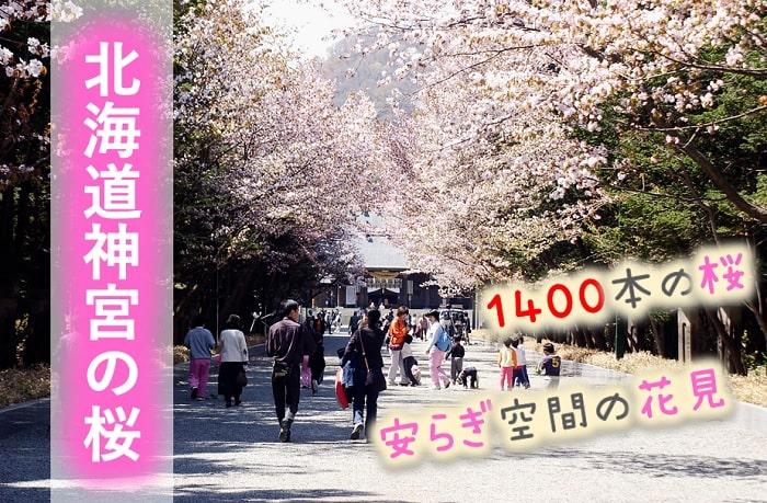 北海道神宮の桜
