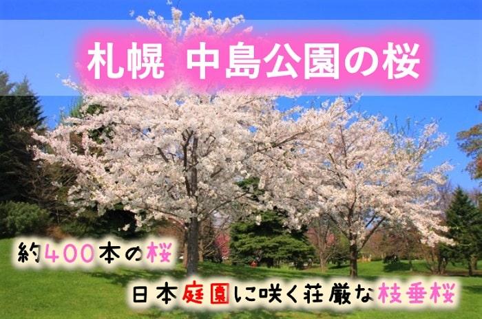 札幌 中島公園の桜