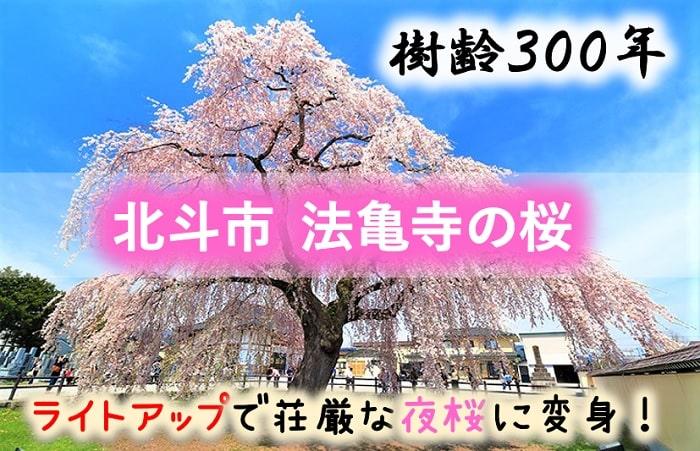北斗市 法亀寺の桜