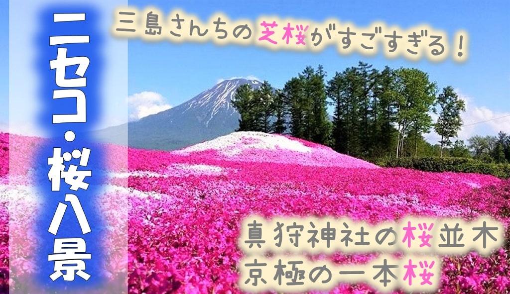 【ニセコ桜八景】三島さんちの芝桜はどこ?千本桜がある?