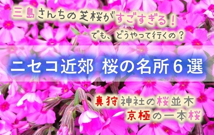 ニセコ、倶知安、真狩、京極 桜の名所