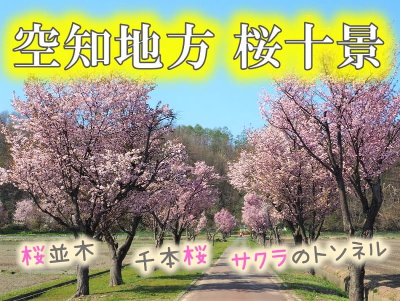 空知桜十景!美唄の東名公園など名所満載!