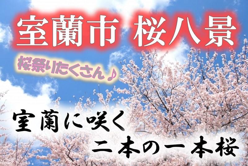 【室蘭市・桜八景】見頃はいつ?桜祭りとライトアップは?