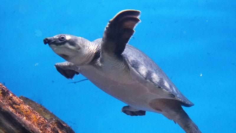新さっぽろサンピアザ水族館