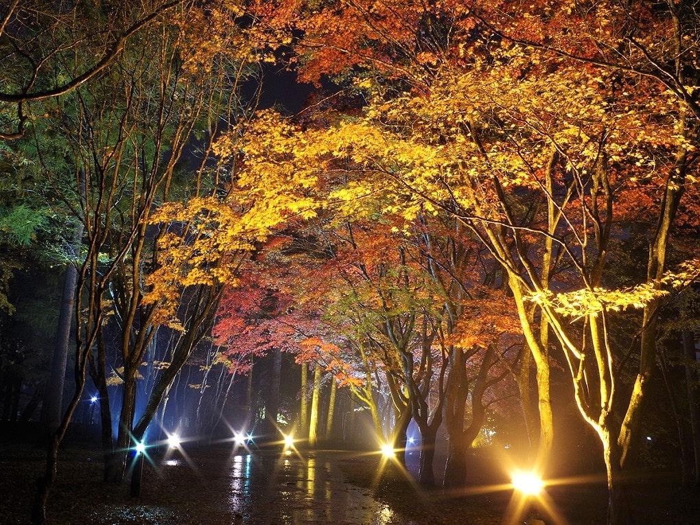 函館の紅葉スポット