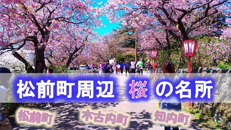 松前町周辺の桜