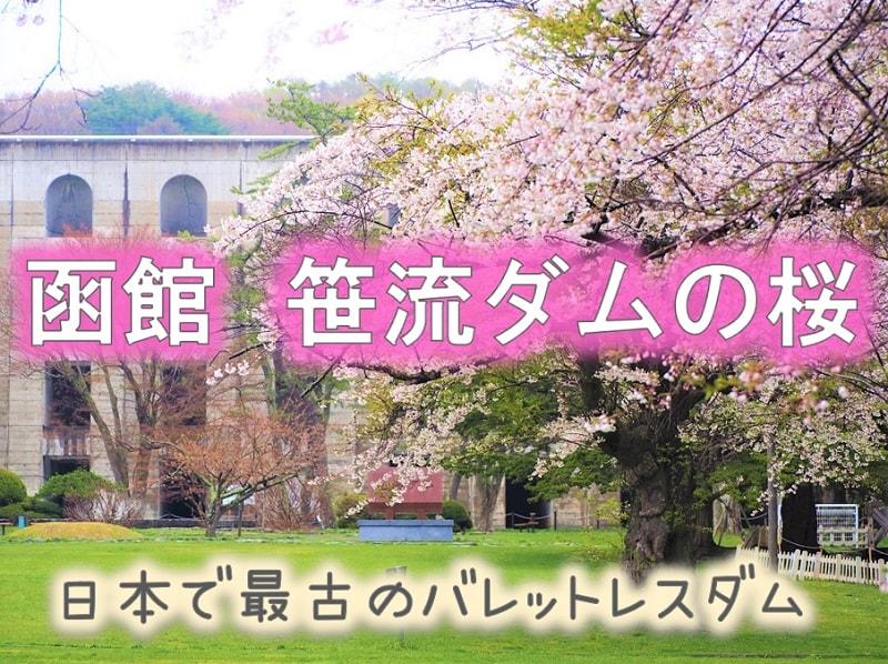 函館 笹流ダムの桜