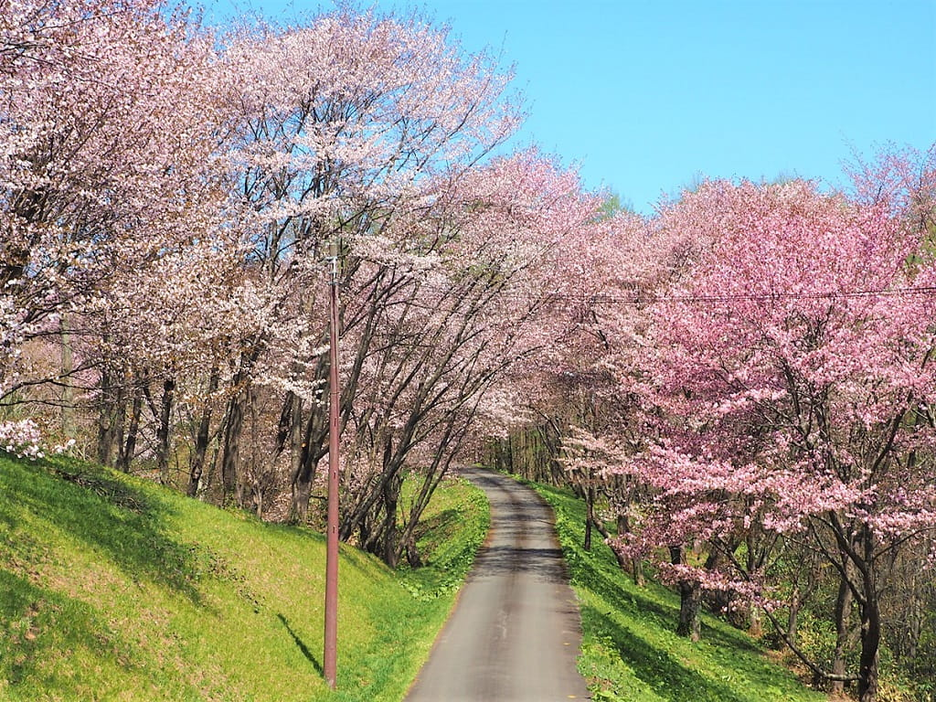 【空知桜の名所】最高の穴場「にわ山森林自然公園」