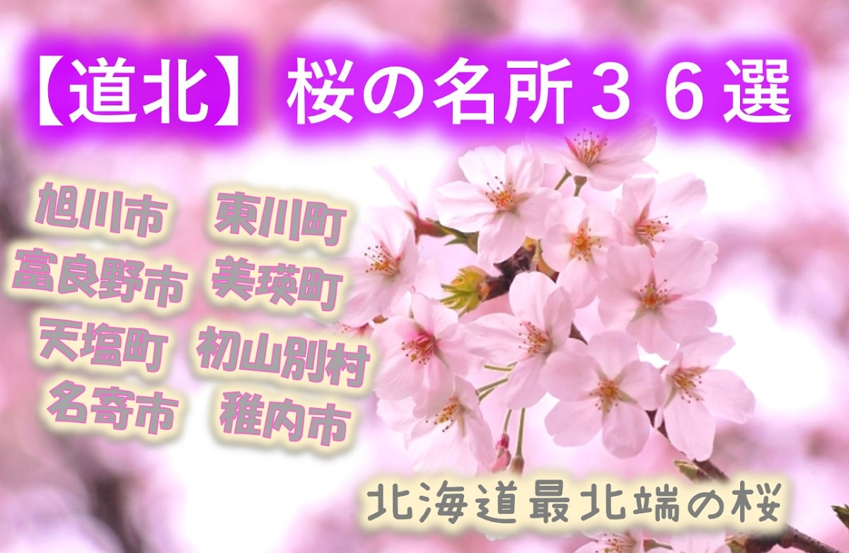 【道北桜の名所36選】旭川に旭山公園!富良野に一本桜!初山別に有明桜ロード!まだまだあります!